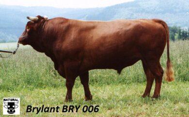 BRY 006 BRYLANT(134 382 006)