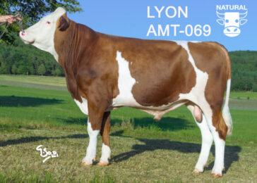 AMT 069 LYON-* málo frekventovaný otec * výkonná matka s výborným zevnějškem z Kolovče * jeden z prvních vnuků Valfina