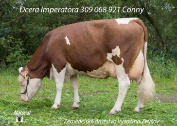 HEL 079 IMPERATOR-* skvělá vlastní plodnostbr * mléčný výkon