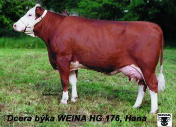 HG 176  WEINO-* velmi dobrá vemena        br * špičková plodnost dcer          br * dlouhověkostbr * jistota prověřeníbr * FIT