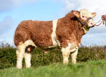 ISI 138 JERICHO P-* Pochází z úžasné rodiny krav * Pětihvězdičkový býk pro mateřské a užitkové vlastnosti * na krávy