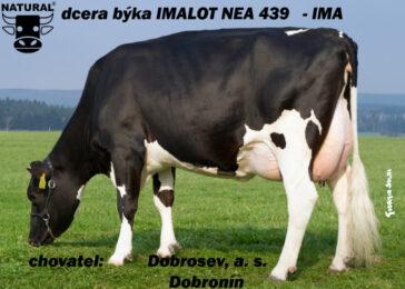 NEA 439 IMALOT-* Fantastický mléčný výkon * Výtečná tělesná kondice    * odolnost a dlouhověkost * kappa kasein AB * FIT * na jalovice