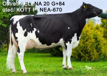 NEA 670 KOTT-* geneticky bezrohý   * doporučen pro systémy s mléčnými roboty * FIT * kappa kasein AB * skvělý zevnějšek * na jalovice