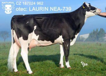 NEA 739 LAURIN-* špičkový nepříbuzný plemeník bez nedostatků      * vysoké SIH i TPI * FIT * na jalovice