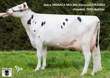 NEA 866 MONACO-* Matka je vlastní sestrou Kascolabr * Vysoké mléko, % tuku a bílkovinybr * kappa kasein ABbr * na jalovice