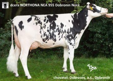 NEA 955 NORTHON-* Extrémní zlepšovatel tvaru vemene!!! * na krávy