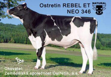 NEO 346 REBEL-* Špičkové plemenné hodnoty bez nedostatků * mléko, končetiny, vemena, fitness