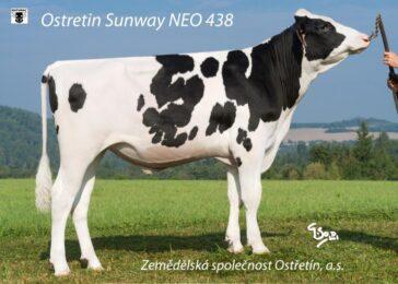 NEO 438 SUNWAY-TOP GENOMIKA + DOMÁCÍ KVALITA  * Komplexní genomicky prověřený býk