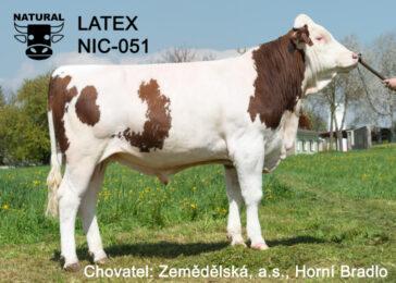 NIC 051 LATEX-* vysoká vlastní plodnost 124 * stejná matka jakou  Monteka AMT 078, Metoda NIC 054 a Montyho AMT 076 * stejná rodina jako úspěšný Imperator HEL 79 * otec je TOP 1 plemeník českého žebříčku