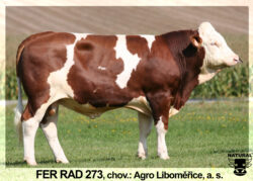 RAD 273 FER-* vysoké mléko  br * dlouhá, prostorná vemenabr * kappa kasein AB