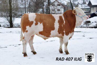 RAD 407 ILIG-* mléko * plodnost dcer * vlastní plodnost 122 * na jalovice