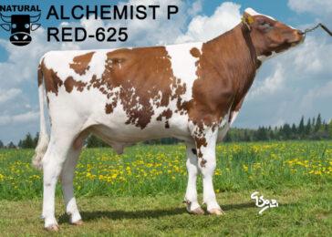 RED 625 ALCHEMIST-* ŠPIČKA MEZI GENETICKY BEZROHÝMI REDY * plodnost dcer (DPR) 3,4 * nepříbuzný * na jalovice