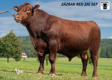 ZAI 167 ZÁZRAK-* Býk dostal jméno podle plemenných hodnot pro přímý efekt 133 * na jalovice