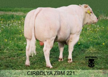 ZBM 221 CIRBOLYA-* mezinárodní působeníbr * skvělá vitální, osvalená a kapacitní telatabr * velmi snadné porodybr * na jalovice