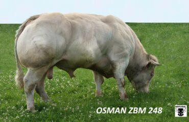 ZBM 248 OSMAN(220 496 248)