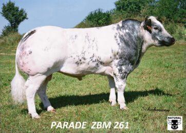 ZBM 261 PARADE-* výborné osvalení * plný belgický původ * skvělé PH pro růst * kapacita 130, osvalení 129, užitkový typ 130 * na jalovice
