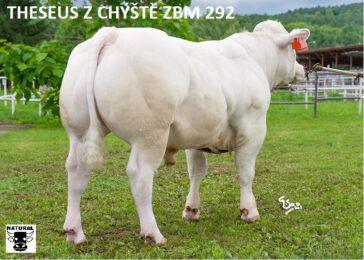 ZBM 292 THESEUS Z CHÝŠTĚ B ET-* z chovu Oldřicha Rozsévače * bílé zbarvení * na krávy