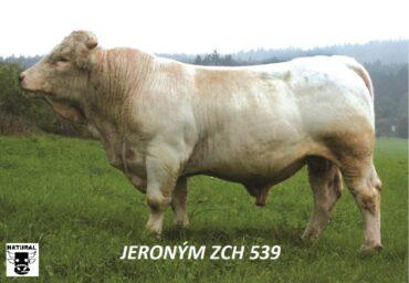 ZCH 539 JERONÝM-* skvělý původ, růst a kostra * nadprůměrný maternální efekt * na krávy