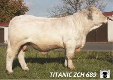 ZCH 689 TITANIC-* býk dovezen z Francie * pro převodné křížení i čistokrevnou plemenitbu * na krávy