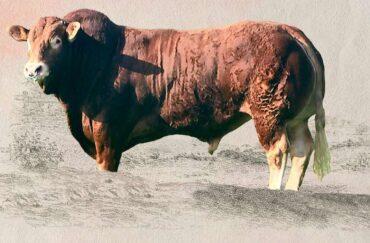 ZIL 973 NELOMBO-* ID z Francie * na krávy