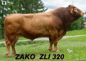 ZLI 320 ZAKÓ-* otec býků * geneticky bezrohý * rámec * mezinárodně využíván * na krávy