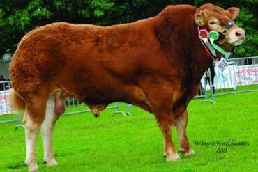 ZLM 244 WILODGE FASTRAC-* dovoz ID z Velké Británie * na krávy