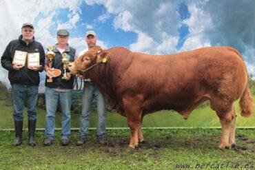 ZLM 397 ABIDOL- br * šampión Limousine show 2014br * hodnocení exteriéru 92 bodůbr * na krávy