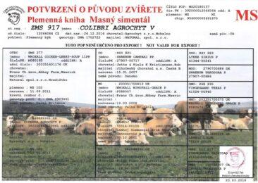 ZMS 917 COLIBRI V(213 581 917)